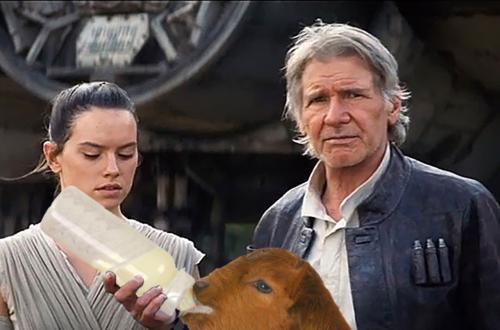 han goat