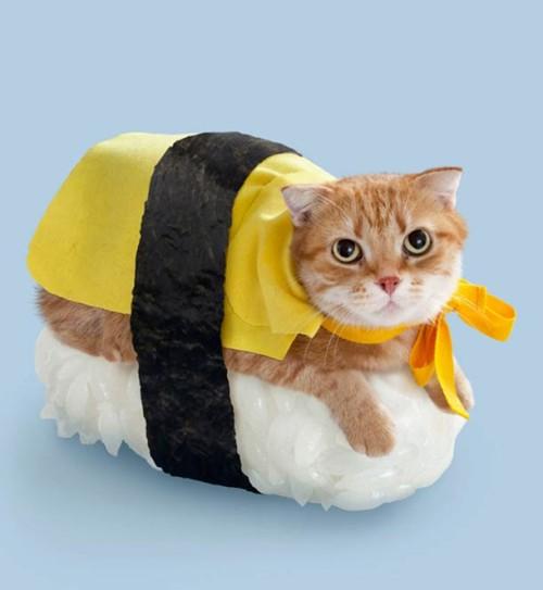 sushi cat1