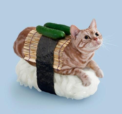 sushi cat3