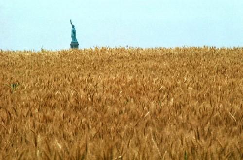 wheat libertyb