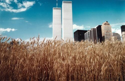 wheat wtc
