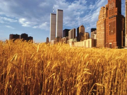wheat wtc2